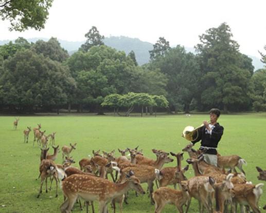 画像は奈良の鹿愛護会ホームページより